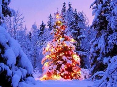 Kerstboom in bos